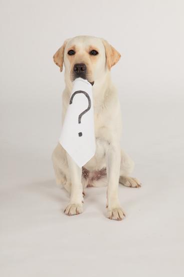 可爱拉布拉多犬热血演出,笑料不断,同时也充满感动片刻的动物电影杰作