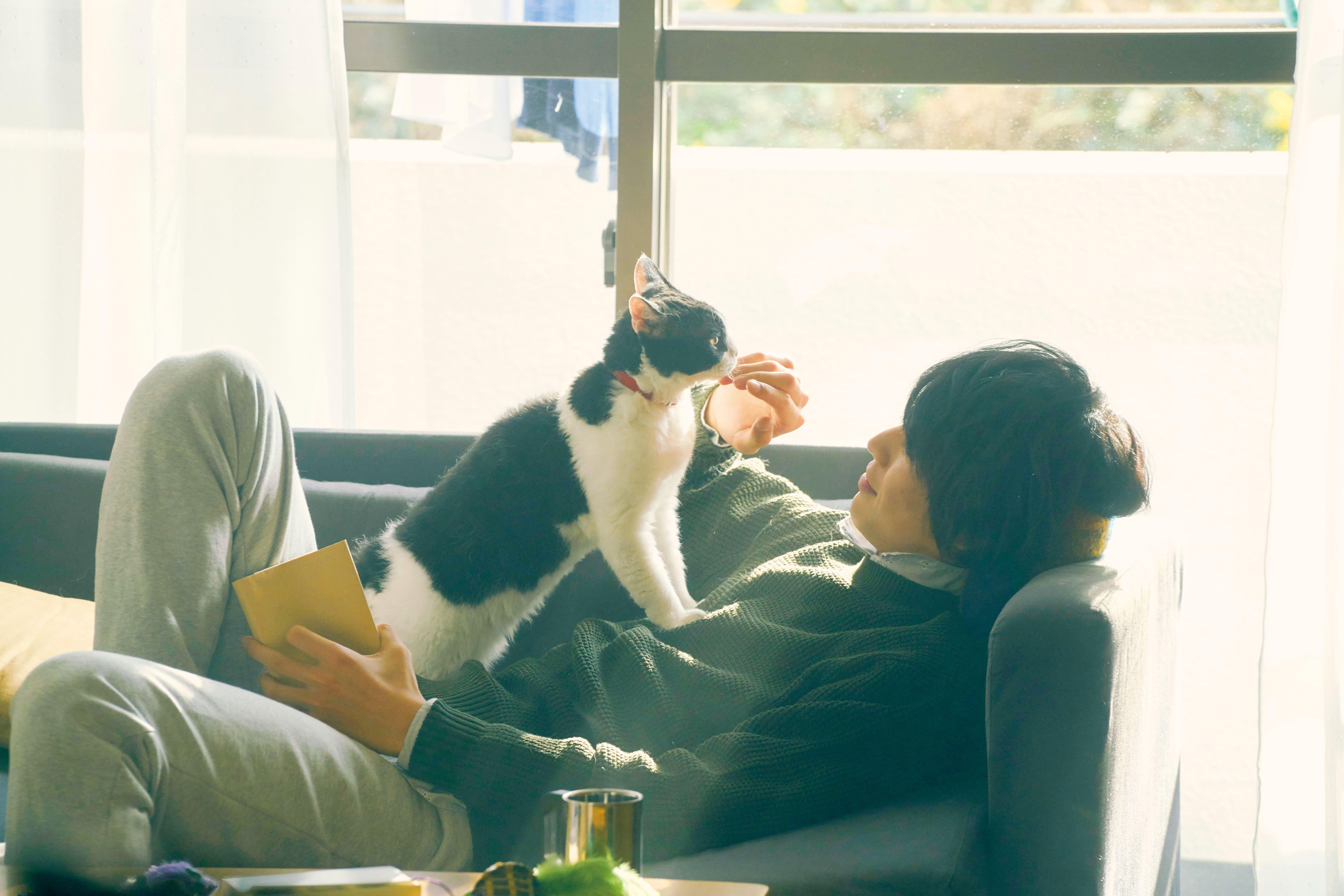 福士蒼汰 化身暖男貓奴 被貓撩到直呼「太可愛」  療癒新作《旅貓日記》1月4日感人獻映